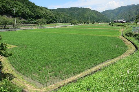 kinuhikari0087.jpg